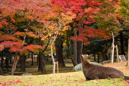 関西(近畿)の紅葉スポット